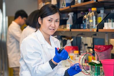 35557 Dr Wei Du Lab June 2017