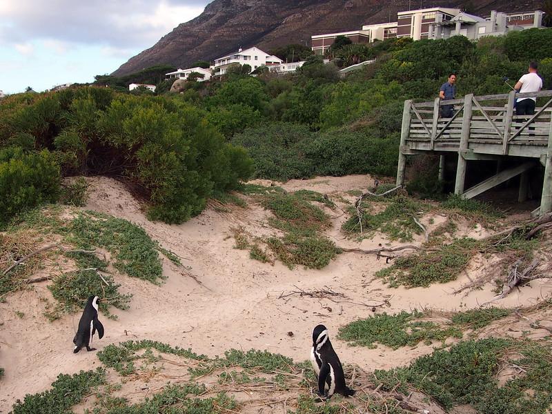 P5197287-penguins.JPG