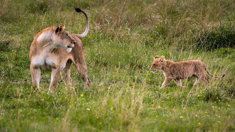 Attack of the Buffalos-0114.jpg