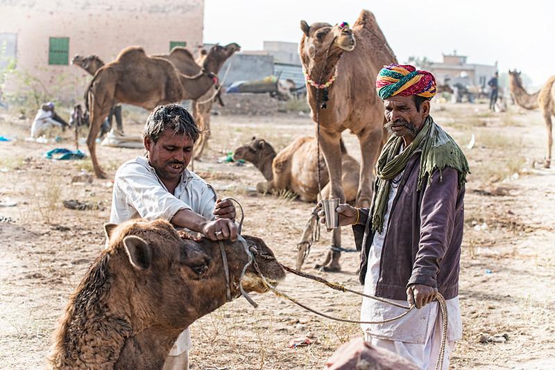 Camel Preparation.jpg
