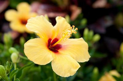 Maui 2009 (Days 1 & 2): Lahaina