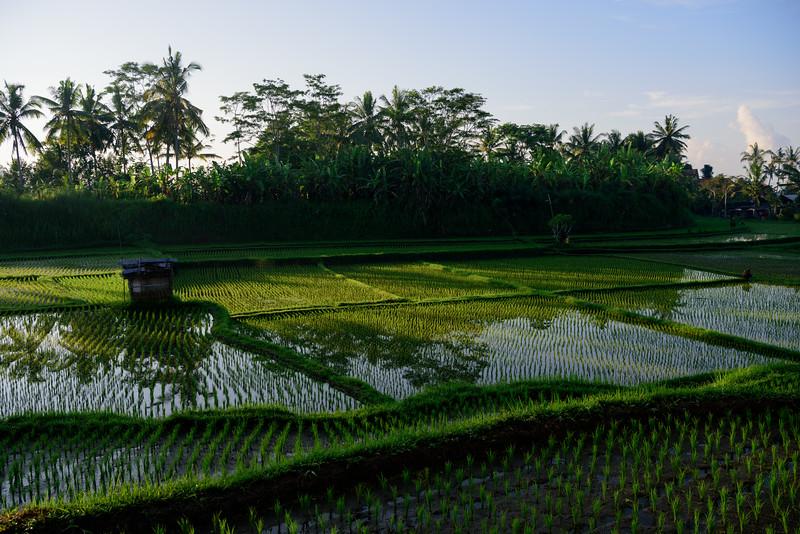160220 - Bali - 3065.jpg