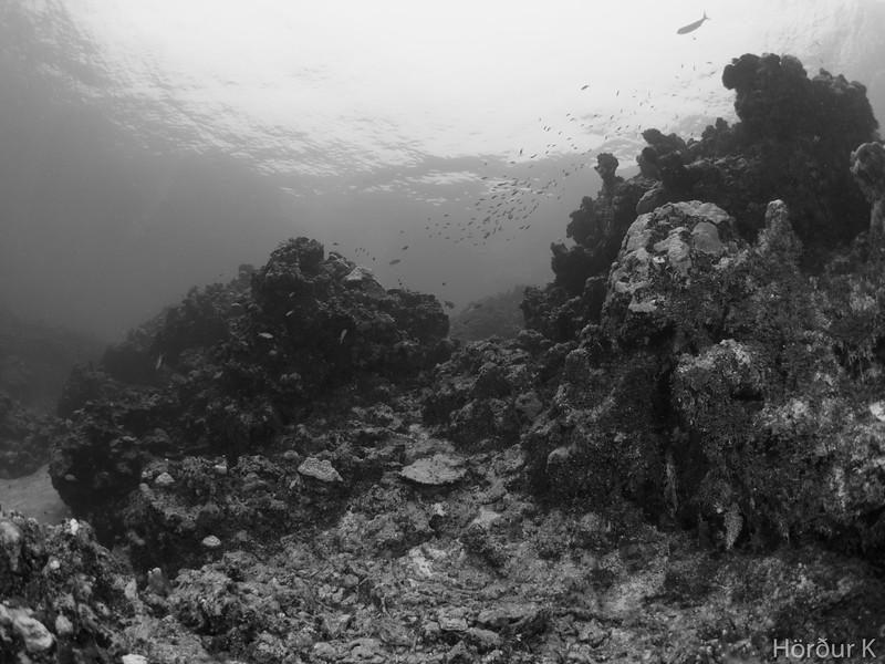 Pizon Reef