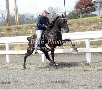 Horses-1