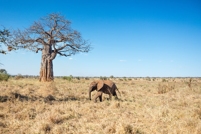 Africa - 102016 - 7871.jpg