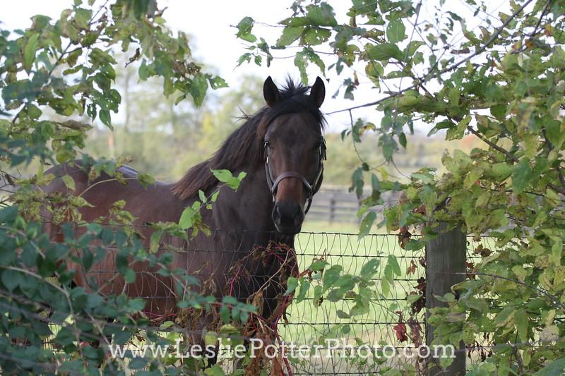 Pony Behind Mesh Fence