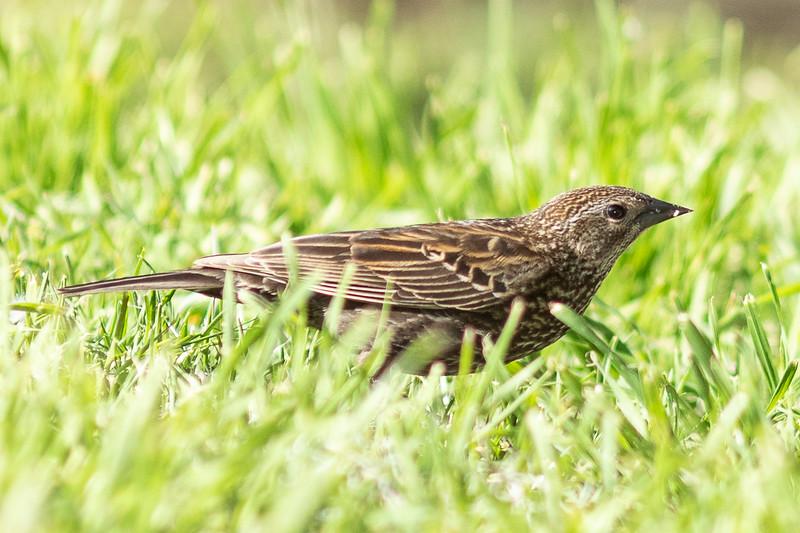 bird-9892.jpg