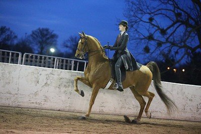 64. Adult 3 Gaited Country Pleasure Championship