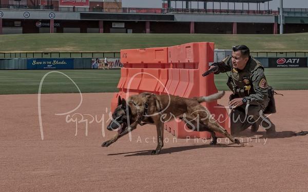 2017 Desert Dog Police K9 Trials (Mesa, AZ.)