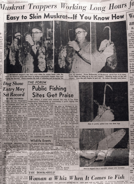 Uncle Norm in the Detroit News on Skinning Muskrats 1-18-1953.JPG