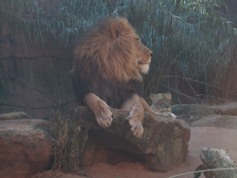 Sydney - Sydeny Zoo-101.JPG