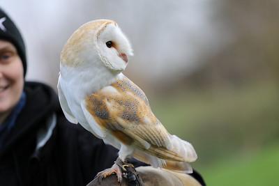 Falconry Family Visit (Thanks Olivia!)