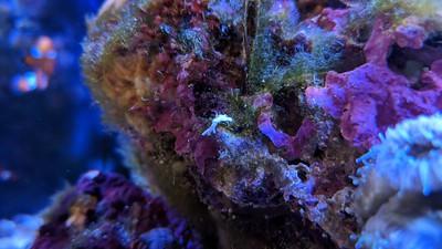 2018-08-10 - Reef tank update