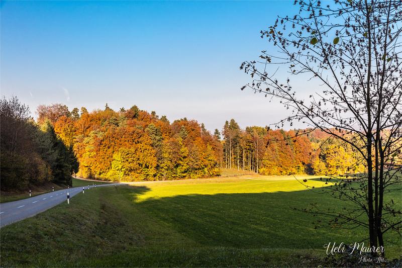 2016-10-31 Herbst Aargau - 0U5A1786.jpg