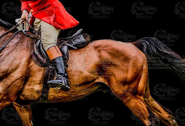Equestrian Portrait Packages