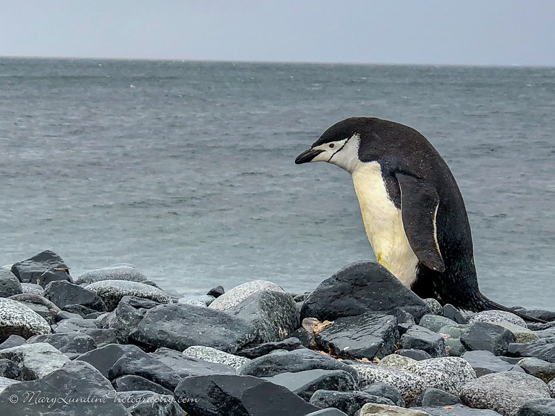 Antarctic-65