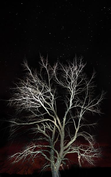 charleshoopes_tree_3_20141019_1834874330.jpg