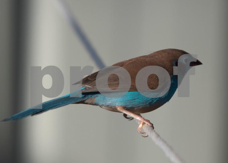 birds 11.jpg