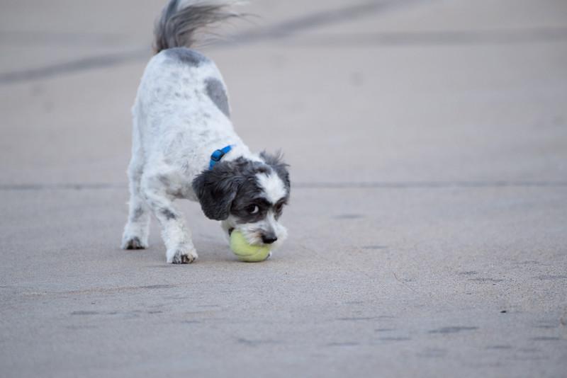LuLu - Brady - Cooper Play Friends (22 of 109).jpg