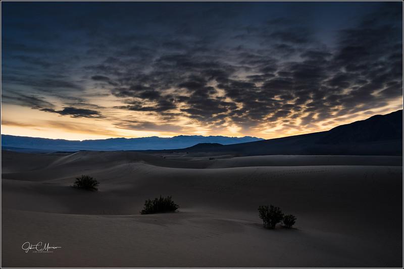 S73_0709 3 bush sunrise LP2x r1W.jpg