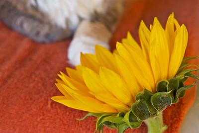 Sunflowerness