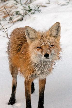 Wild Life - GrandCounty