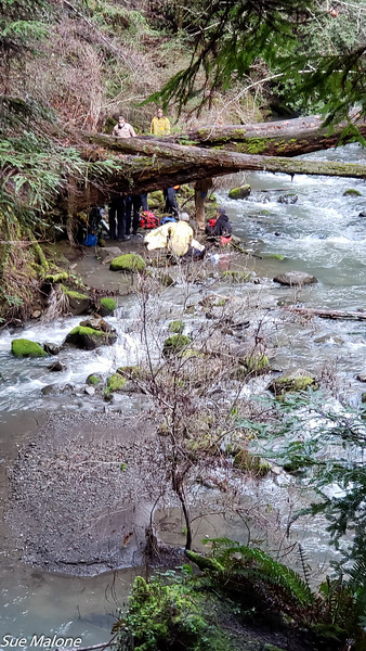 02-16-2021 Rescue at the Avenue of the Giants-3.jpg