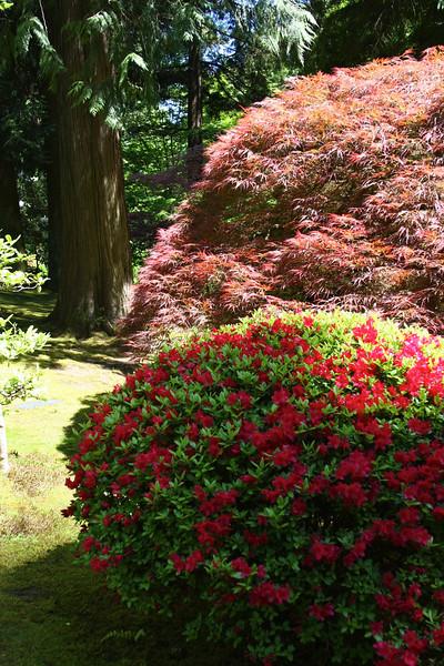 Portland Japanese Garden 6-3-11  1769.jpg