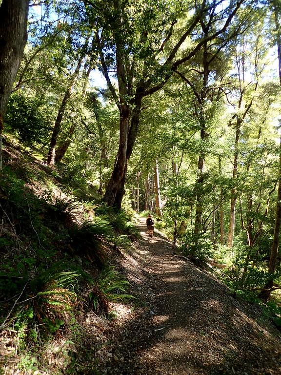 Wild Rogue Loop Trail Rogue River Oregon