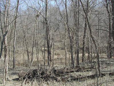 Missouri Spring 2003