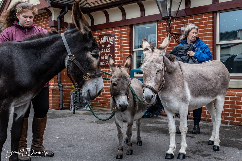 Three lovely donkeys