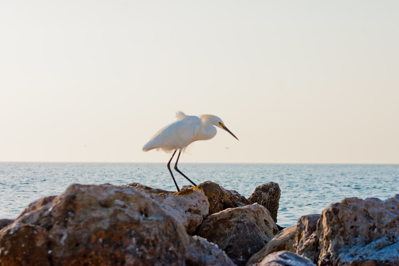Crane on the Rocks in Florida