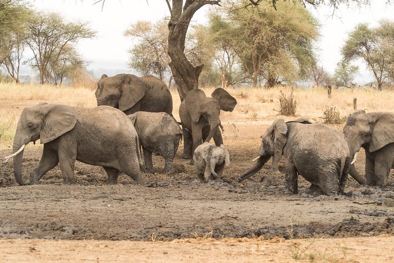 Tanzania_Safari-best-17.jpg