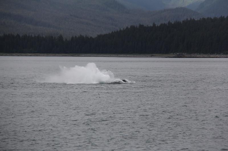 20160717-115 - WEX-Breaching Whale.JPG