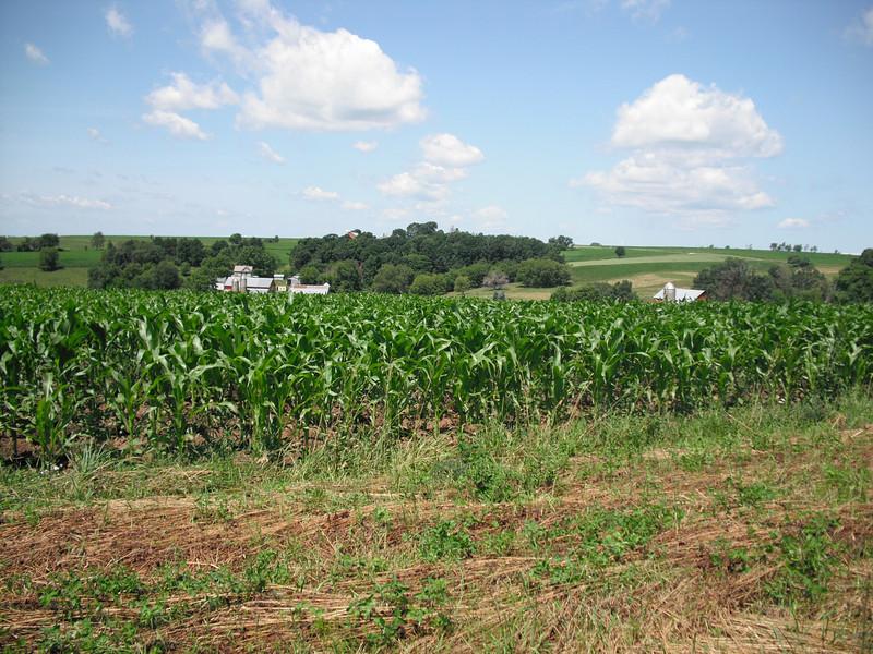 2009-07-11 Rolling farmland outside Cashton WI.JPG