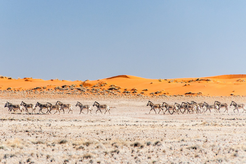 Zebras at Namib Desert in Namibia