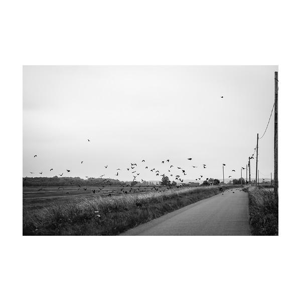 200_FlyingBirds_10x10.jpg