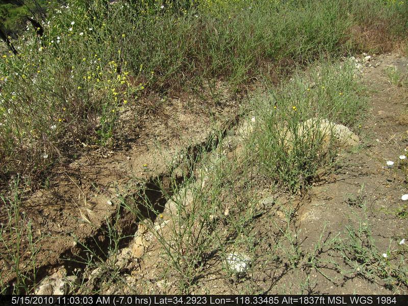 20100515039-Doc Larson Trail Recon.JPG