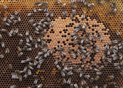 study-75-percent-of-honey-samples-positive-for-pesticide-suspected-of-role-in-the-decline-of-bees