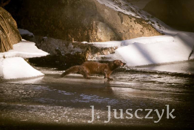Jusczyk2021-2838.jpg