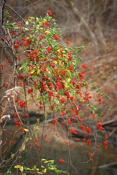 Nature's hanging basket