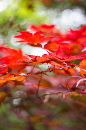 Japanese Garden St Mawgan