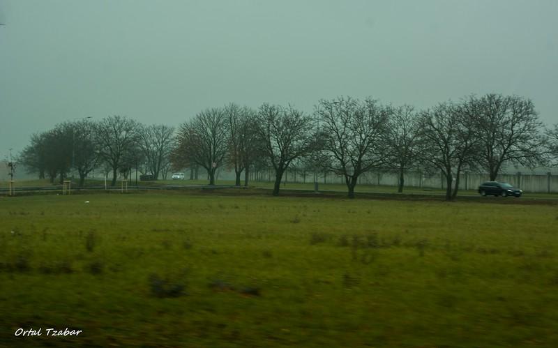 עצים בכניסה לפראג.jpg