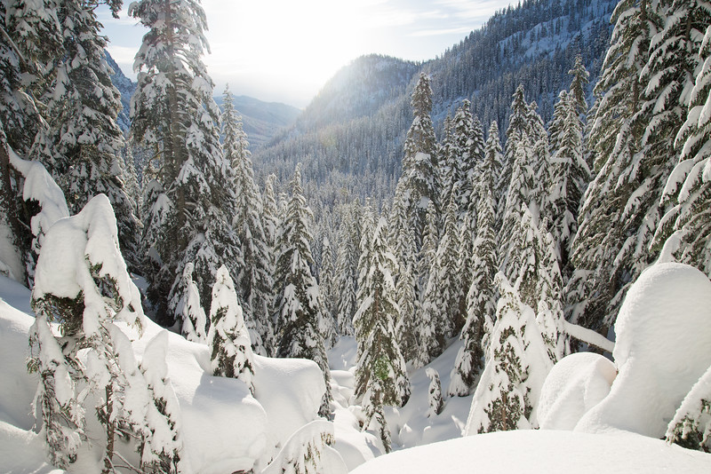 A fresh dump of snow leaves behind a winter wonderland in the mountains near Snoqualmie Pass in Washington.