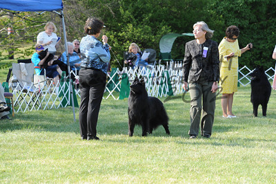 Thursday Working Dog Sweepstakes
