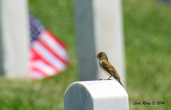 Fort Rosecrans National Cemetery - 6/1/2014