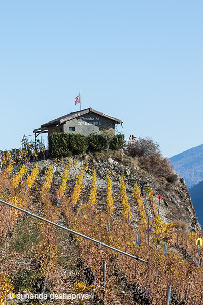 Saillon, Switzerland Oct 18  @ S.Deshapriya-9724.jpg