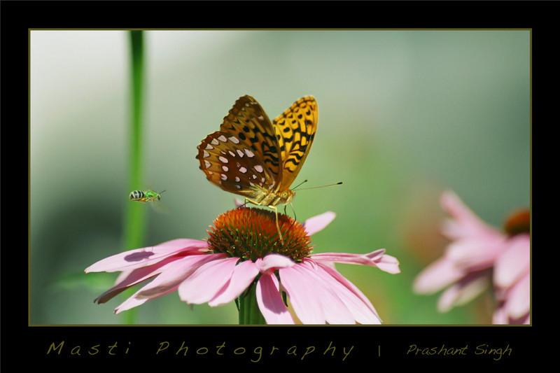 ButterflyAndBee.jpg