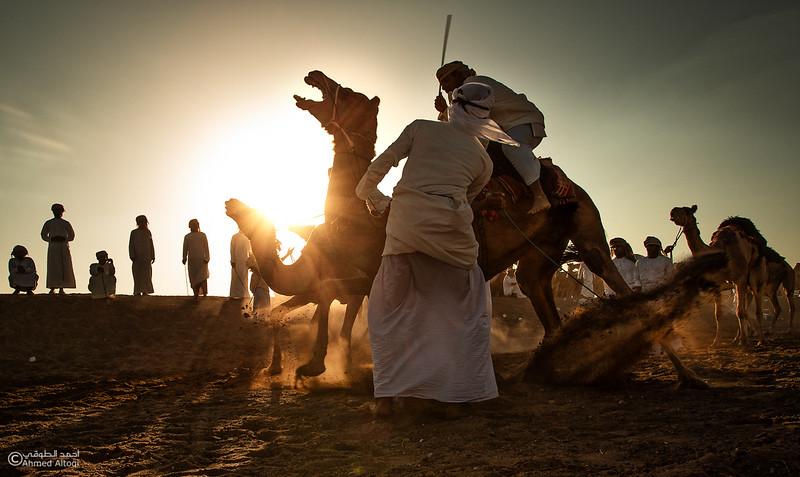 IMGL6397 copy- Camel Race.jpg
