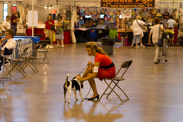 Dog Show at Island Grove
